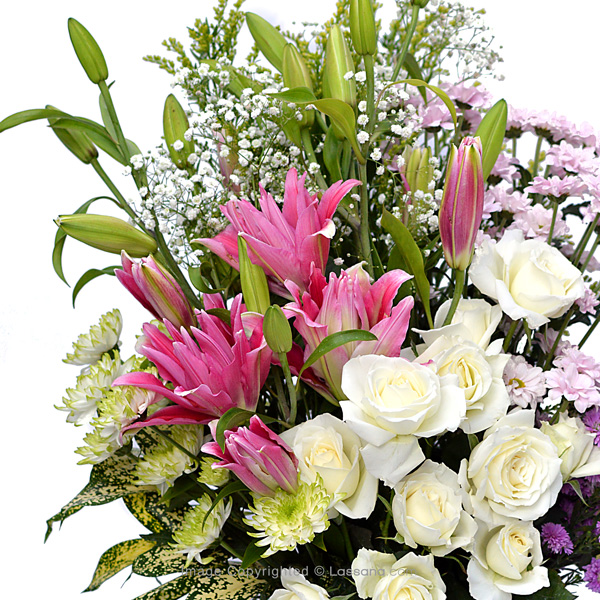 YOU ARE PRECIOUS - Lovely Lilies - in Sri Lanka